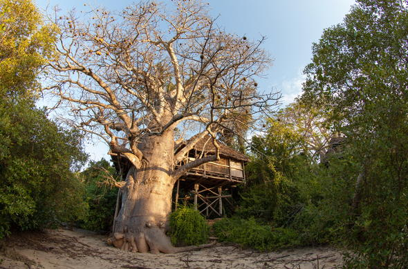 Incredible treehouse accommodation at Chole Mjini Beach Lodge.